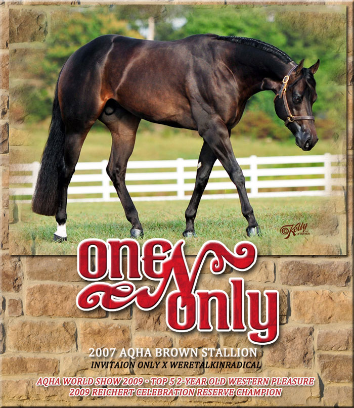 One n only aqha brown stallion by invitation only one n only stopboris Choice Image